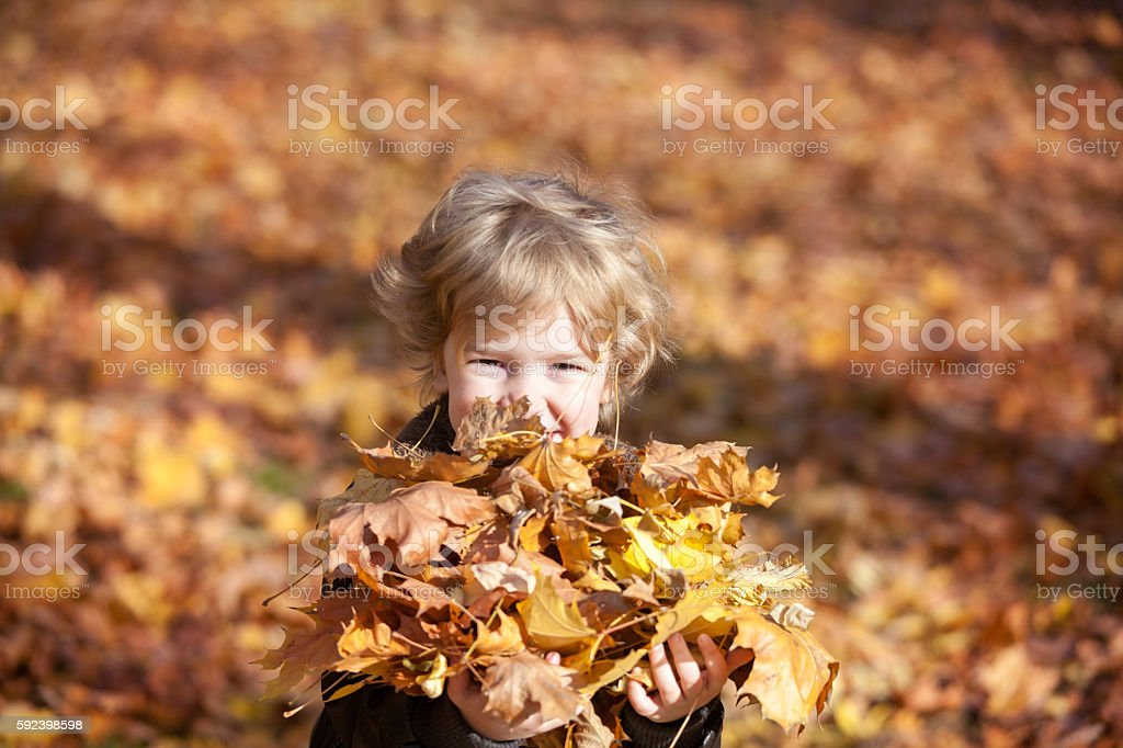 Cute kid with heap of autumn leaves. stock photo