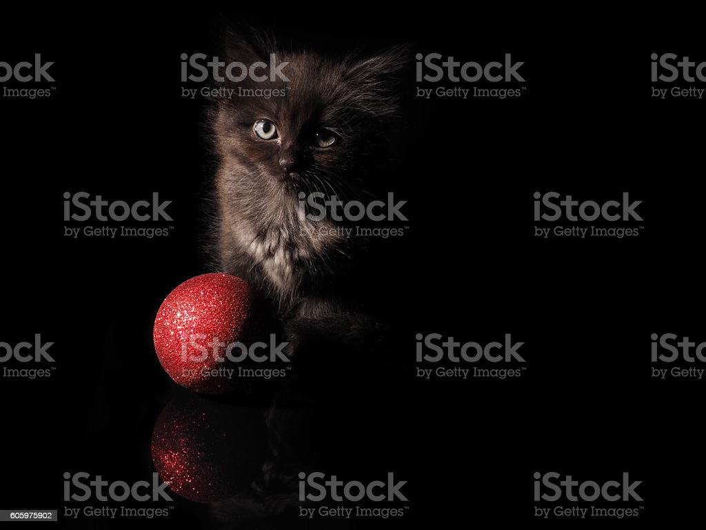 Cute kitten and red Christmas ball on a black background stock photo
