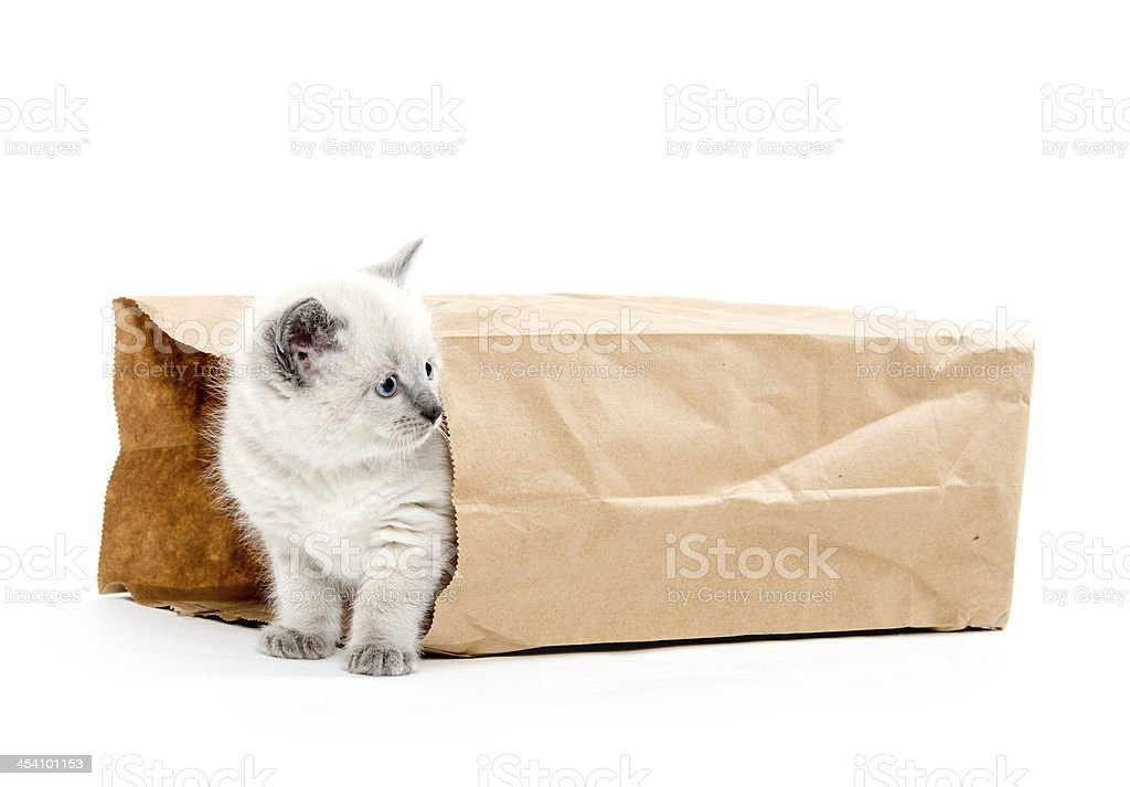 Cute kitten in a bag royalty-free stock photo