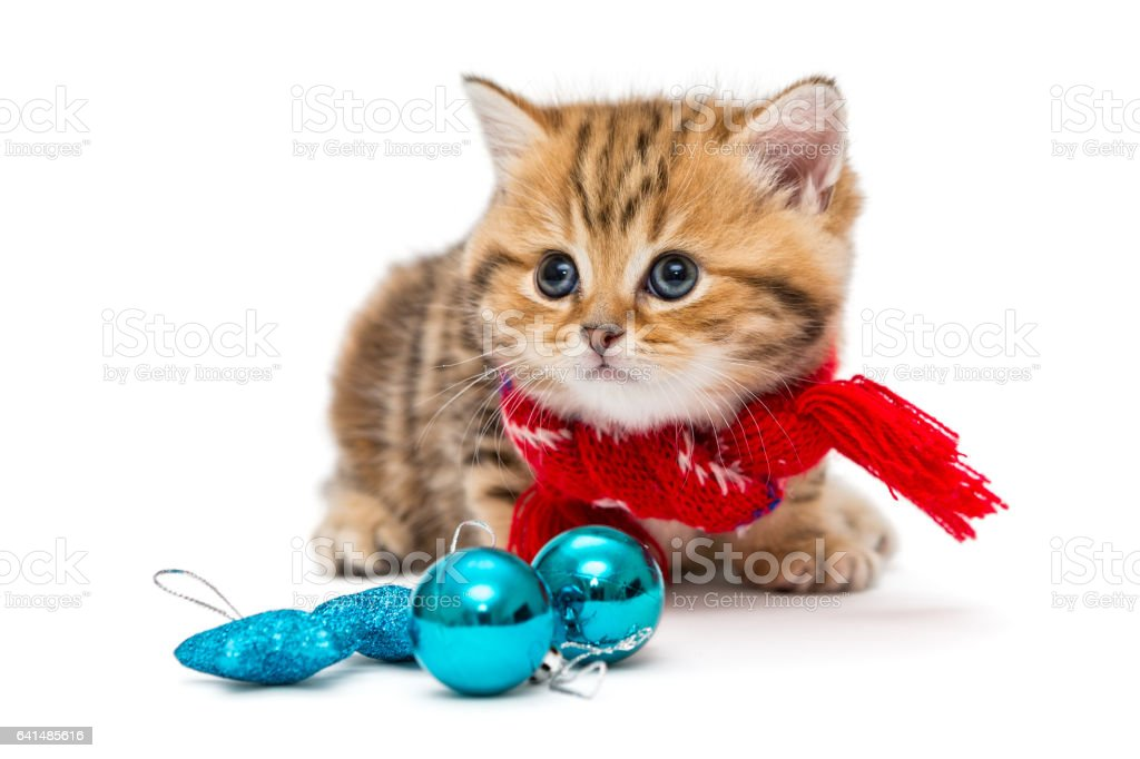 Cute kitten in a red scarf stock photo