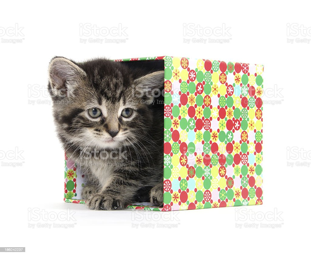 Cute kitten in box royalty-free stock photo