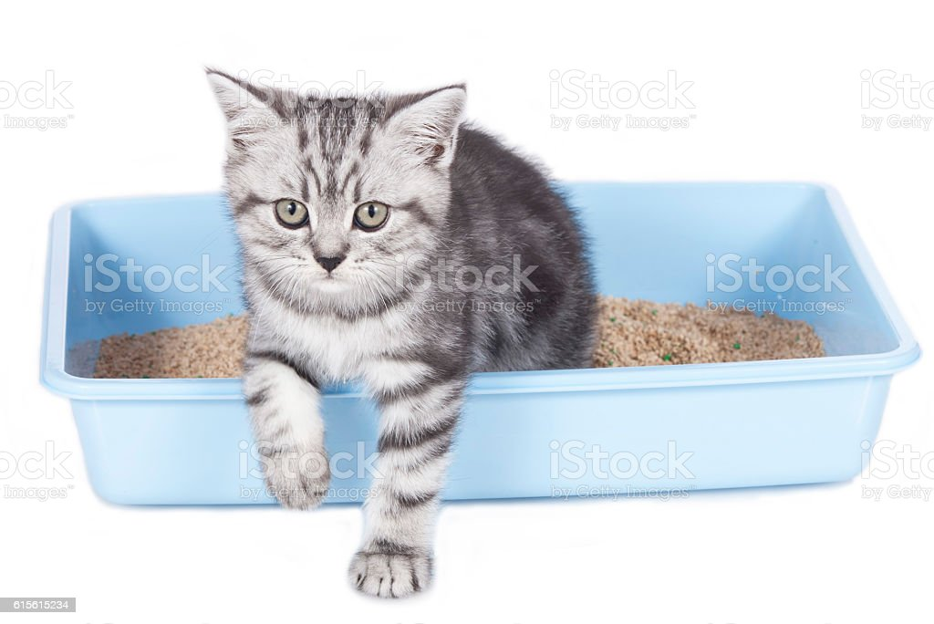 Cute kitten in litter box stock photo