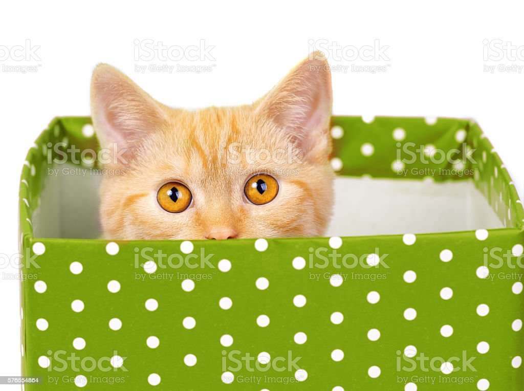 Cute kitten look out of the green gift box stock photo