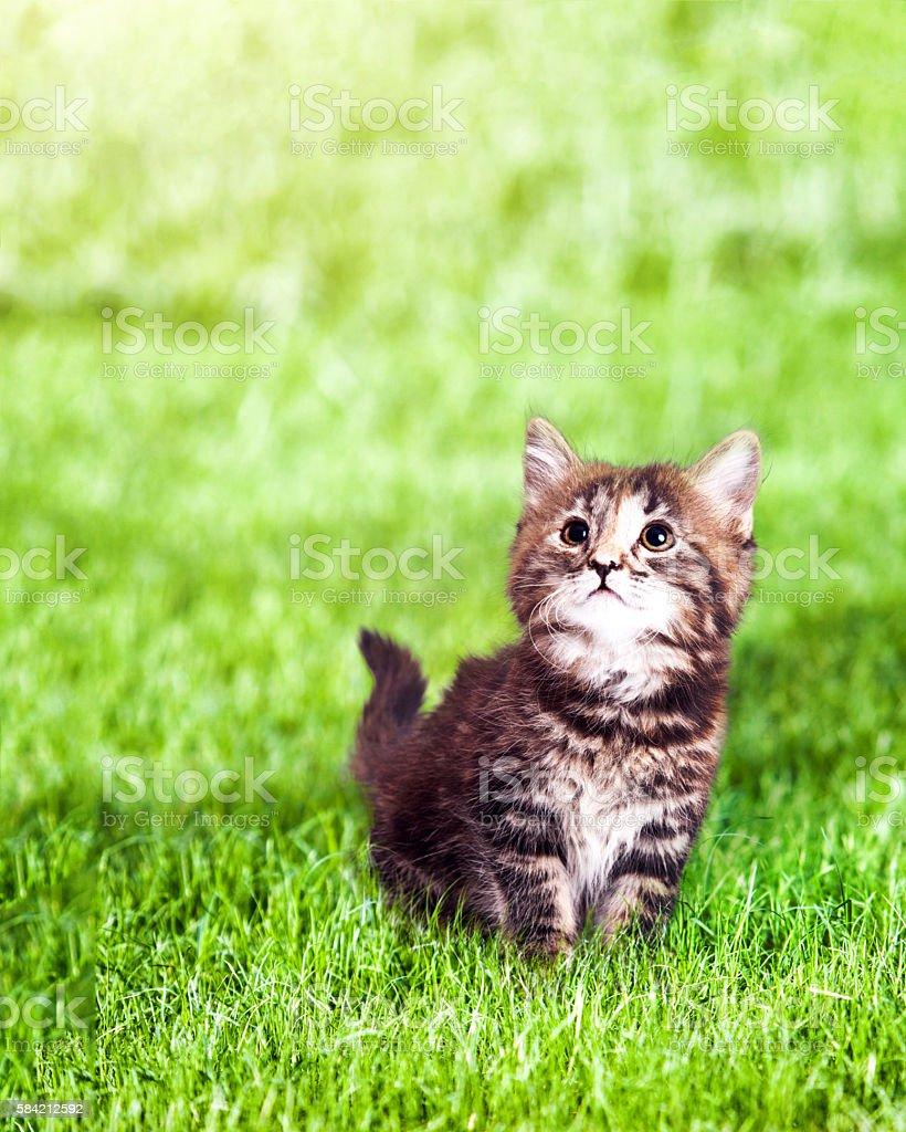 Cute Kitten on Grass Outdoors stock photo