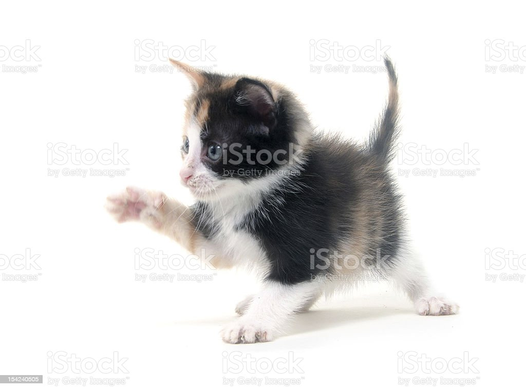 Cute kitten on white stock photo
