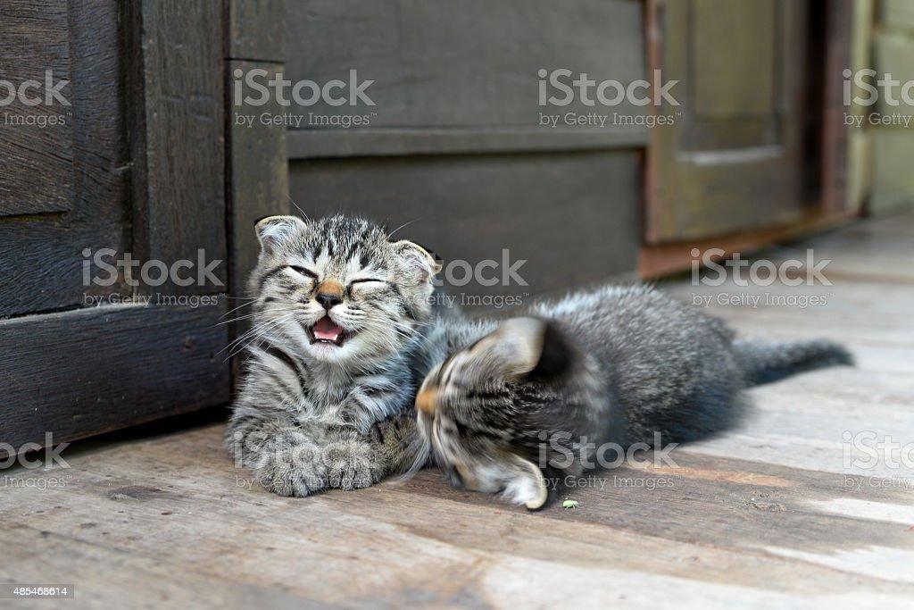 cute kitten on wooden background stock photo