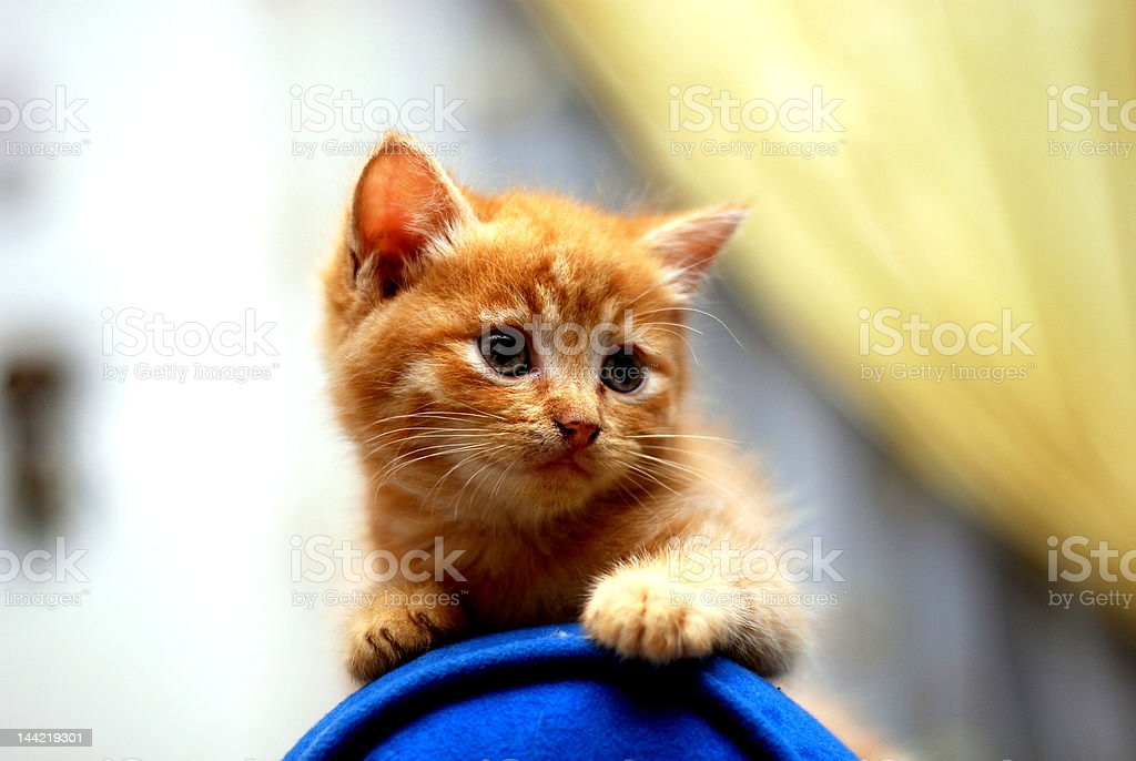 cute kitten stock photo