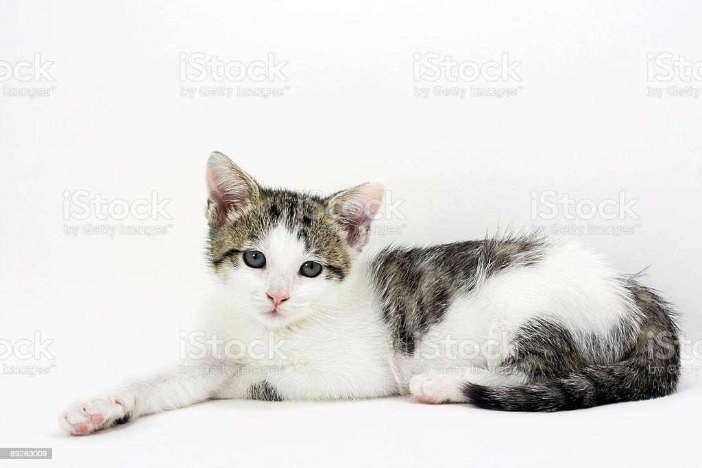 Cute Kitten royalty-free stock photo