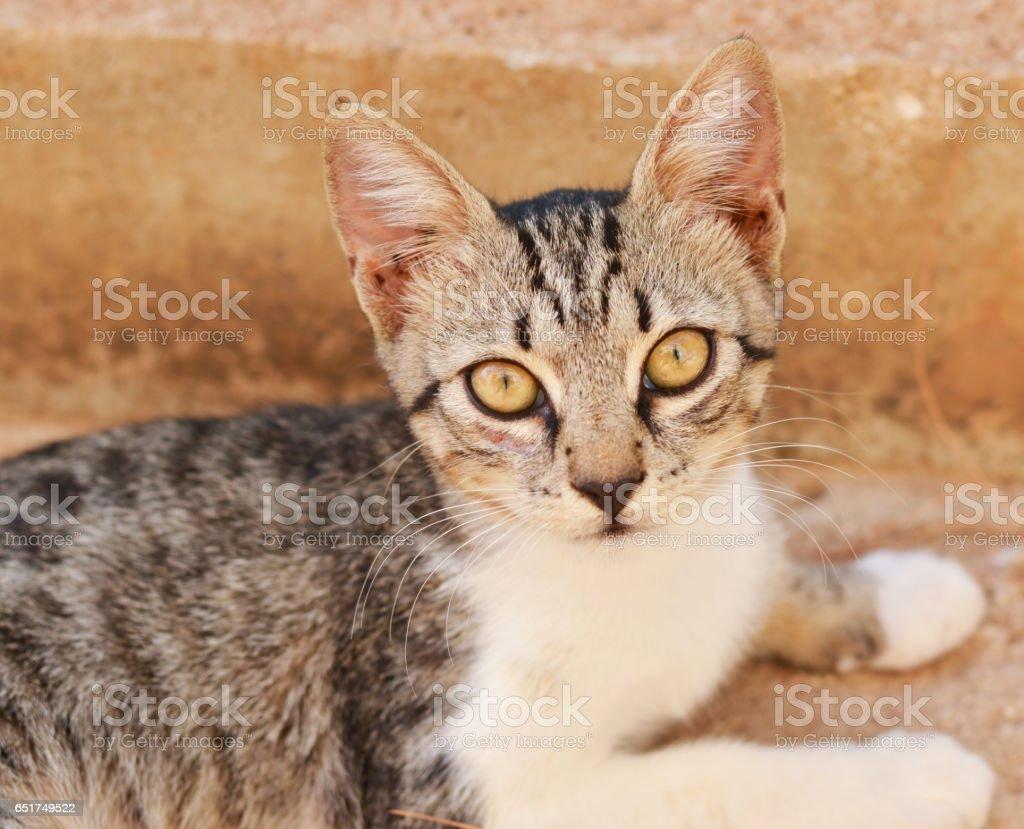 Cute kitten portrait outdoor stock photo