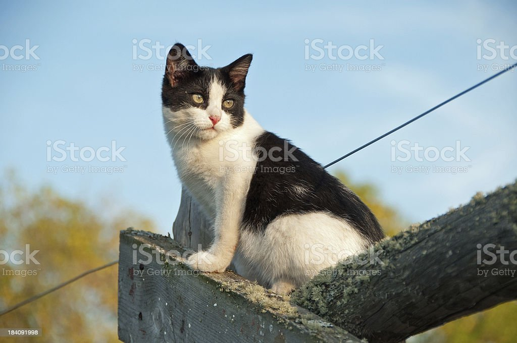 Cute kitten sits on wooden farm fence royalty-free stock photo