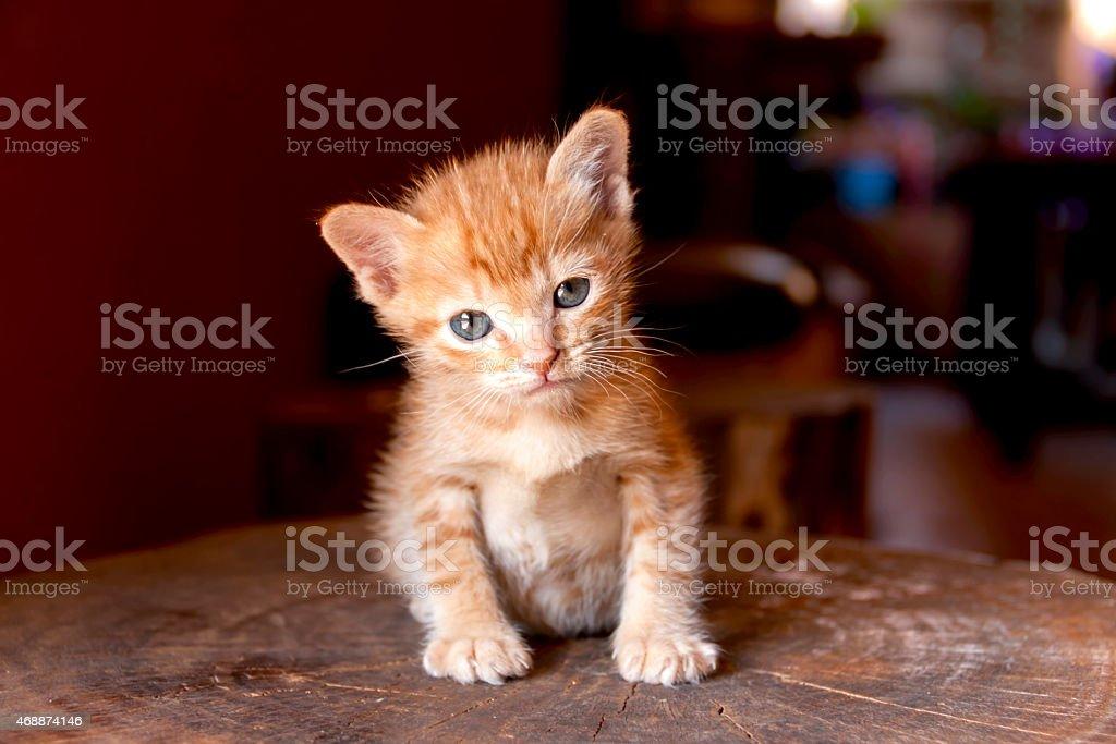 Cute Kitten sitting on the log royalty-free stock photo