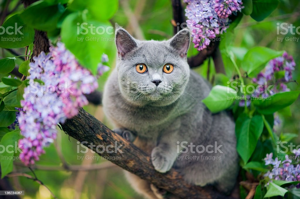Cute kitten walking on a tree stock photo