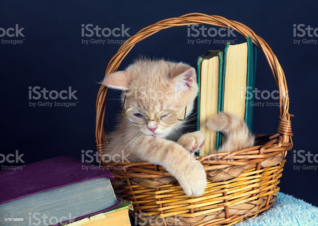 Cute kitten wearing glasses, sitting in a basket with books stock photo