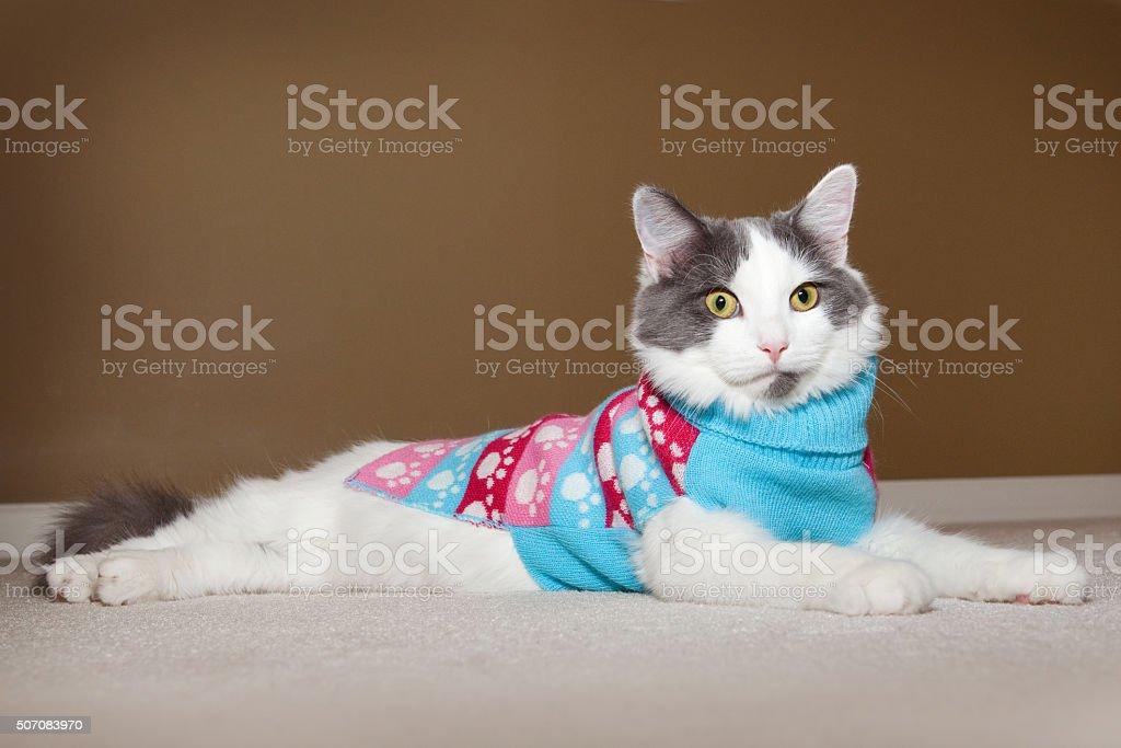 Cute Kitten Wearing Sweater stock photo