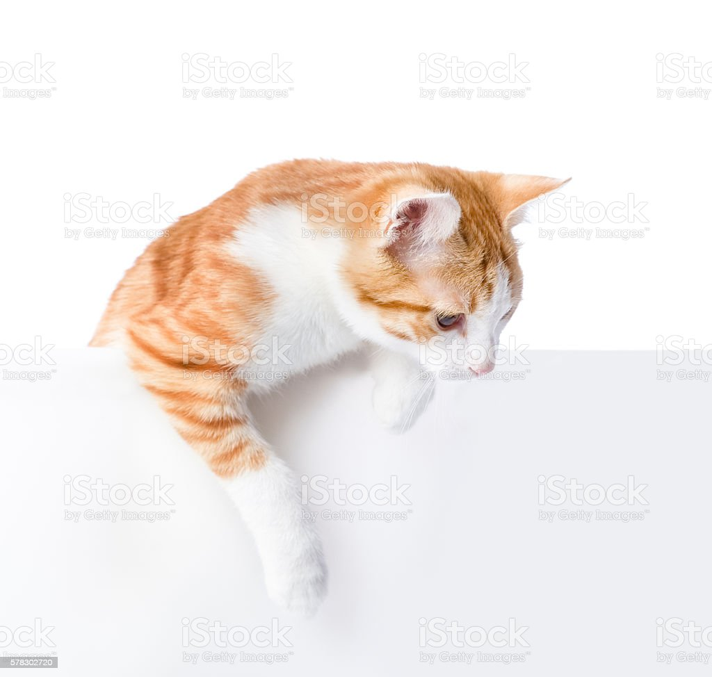 Cute kitten with empty board. isolated on white background stock photo