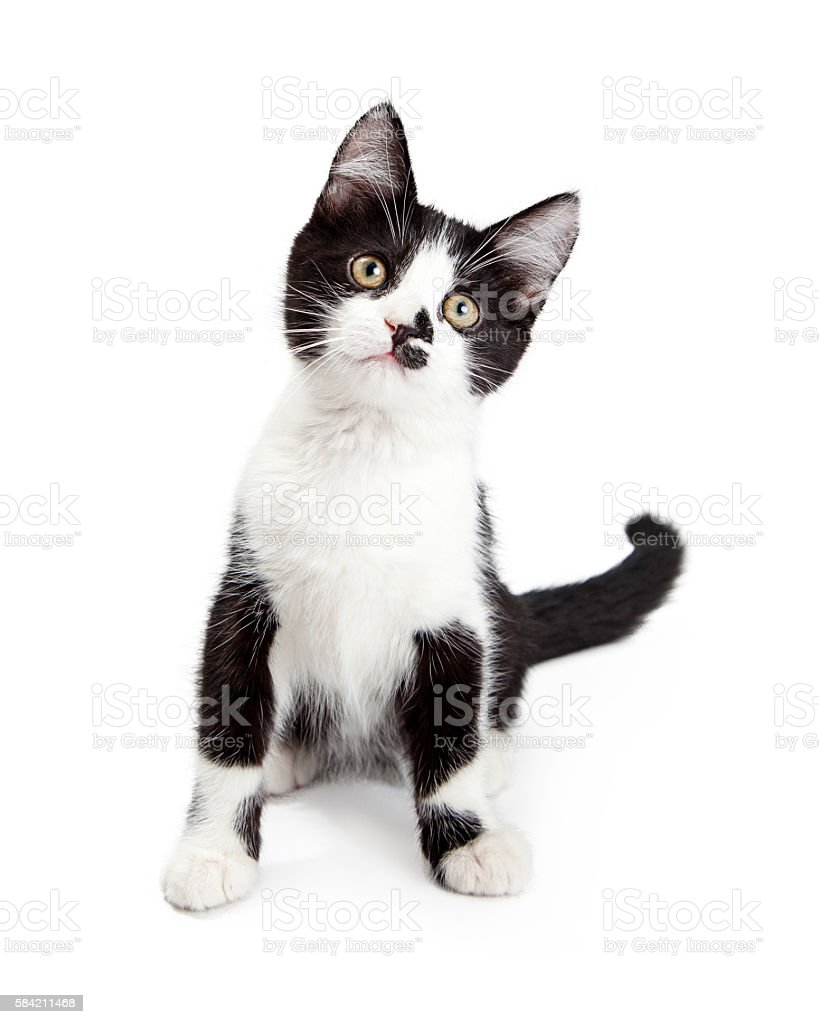 Cute Kitten With Sweet Expression stock photo