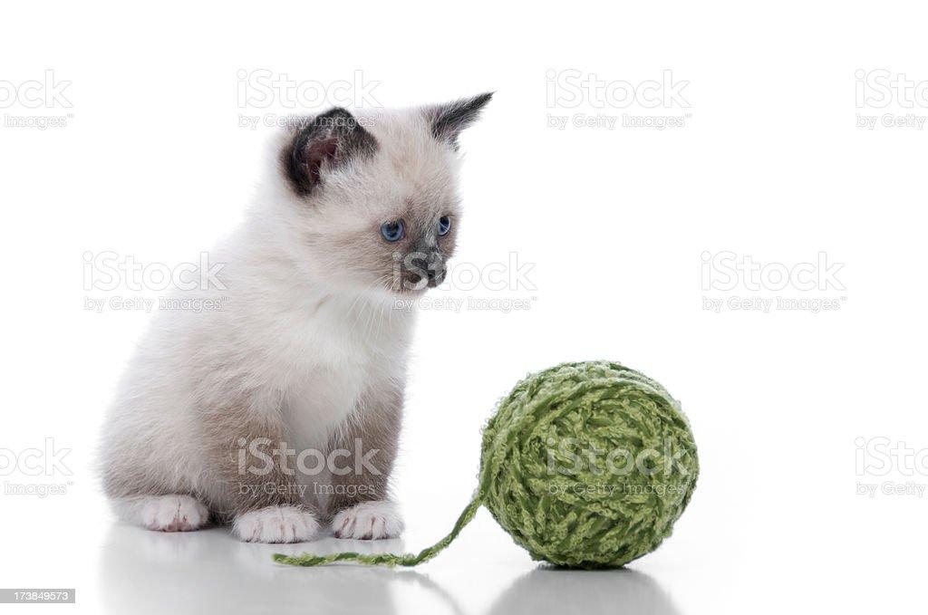 Cute Kittens Series stock photo