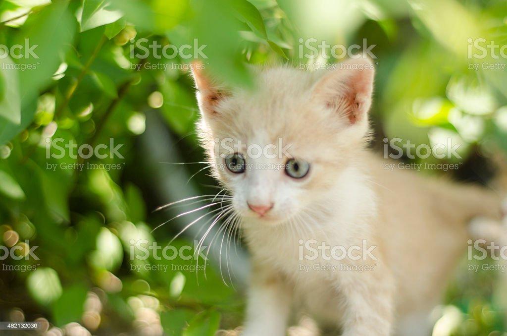 cute kittens walking in the garden stock photo