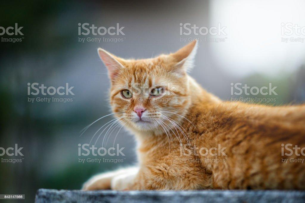 cute kitty portrait stock photo