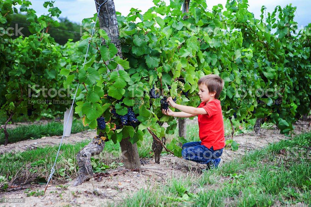 Cute laughing boy, running in a beautiful summer vine yard stock photo