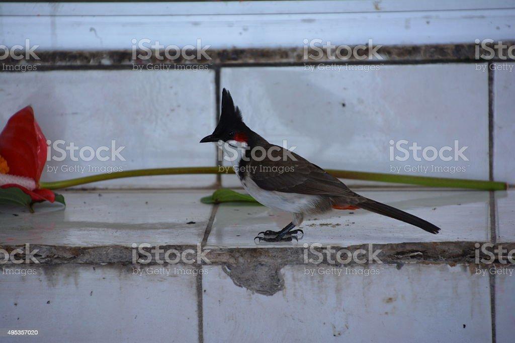 Cute little bird at Ganga Talao stock photo