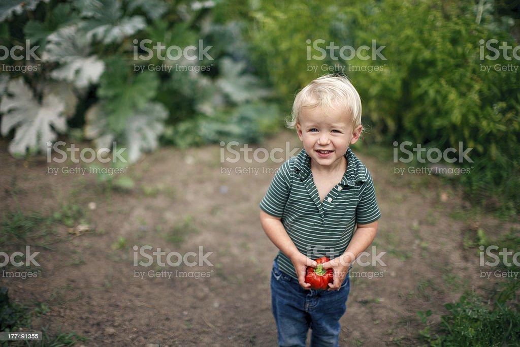 Cute Little Boy Standing in a Garden stock photo