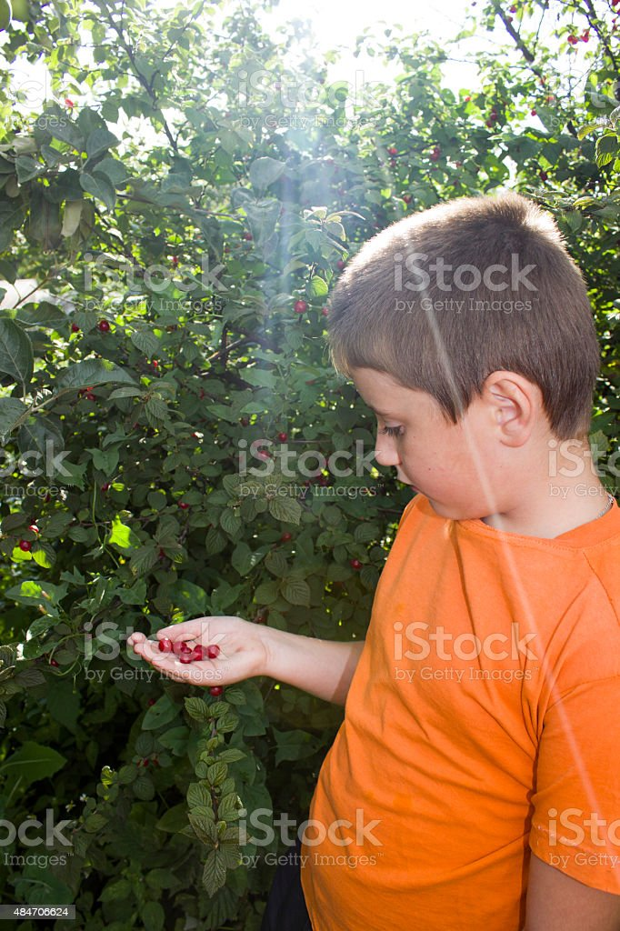 cute little boy with berries cherry in his hand royalty-free stock photo