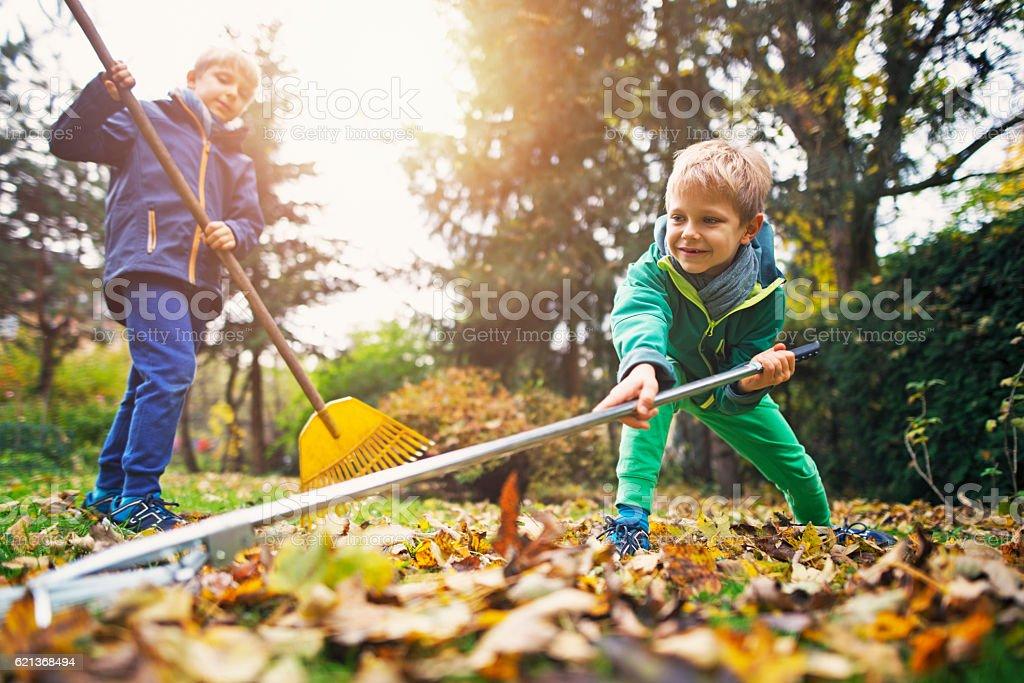 Cute little boys raking autumn leaves stock photo