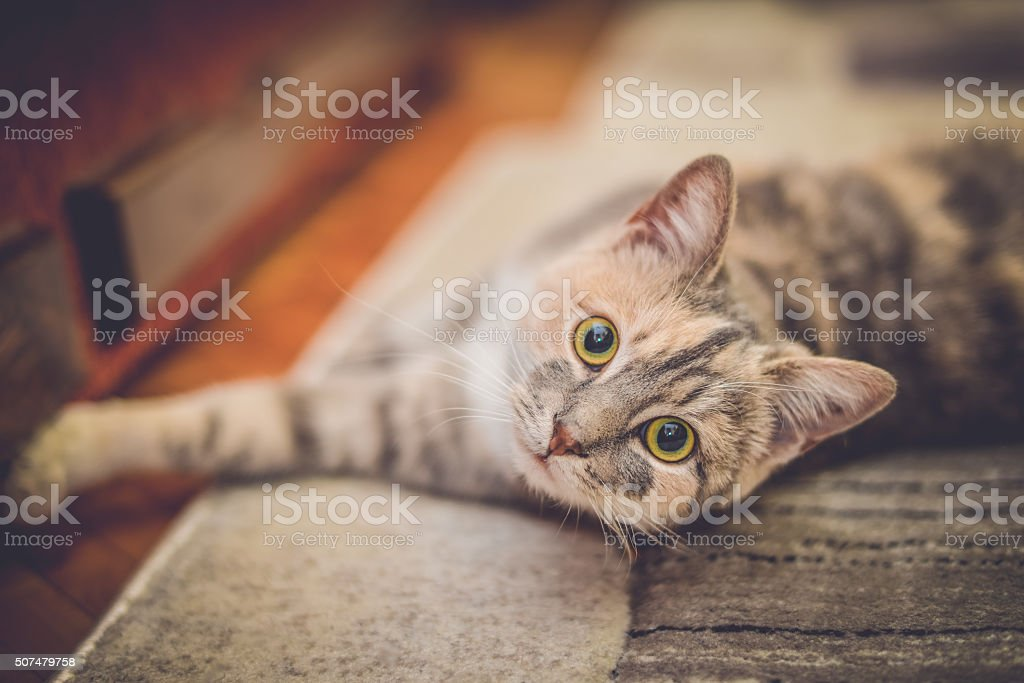 Cute little cat with green eyes lying down