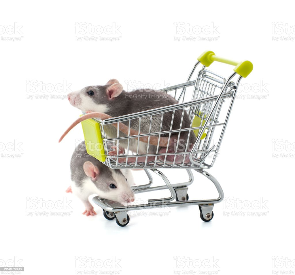 Cute little decorative rats in a shopping cart on a pure white background. stock photo