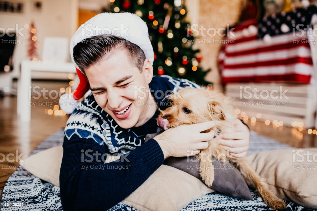 Cute little dog licking his owner's face. stock photo