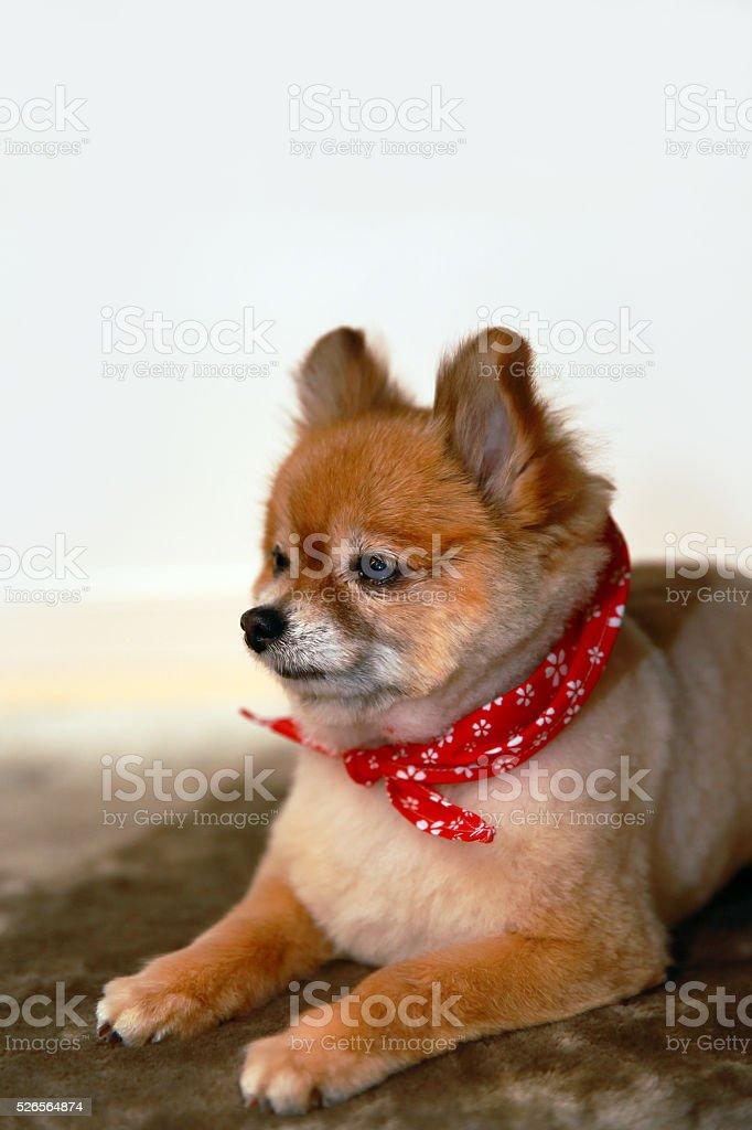 Cute little dog stock photo