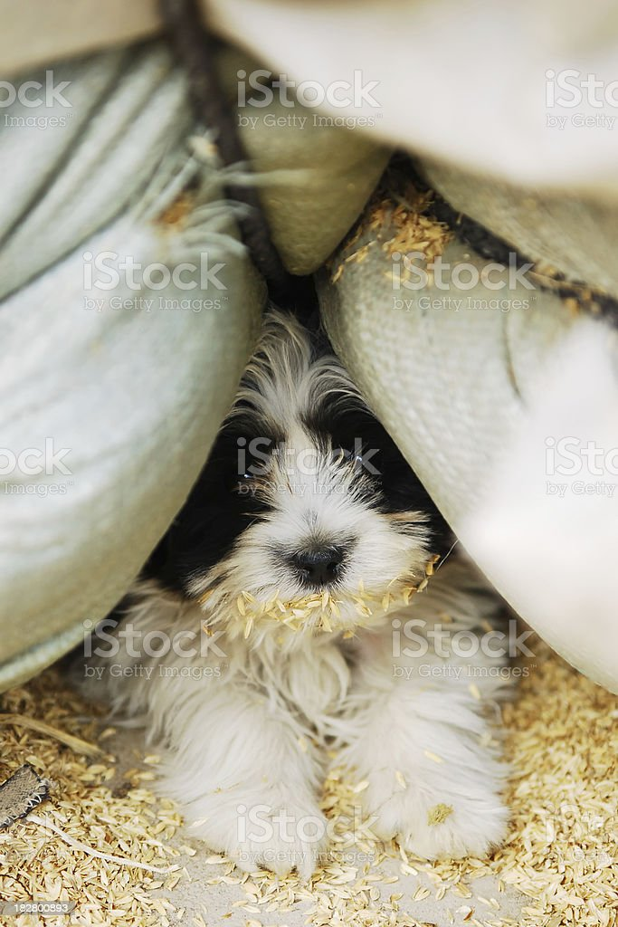 Cute Little Doggy - Large stock photo