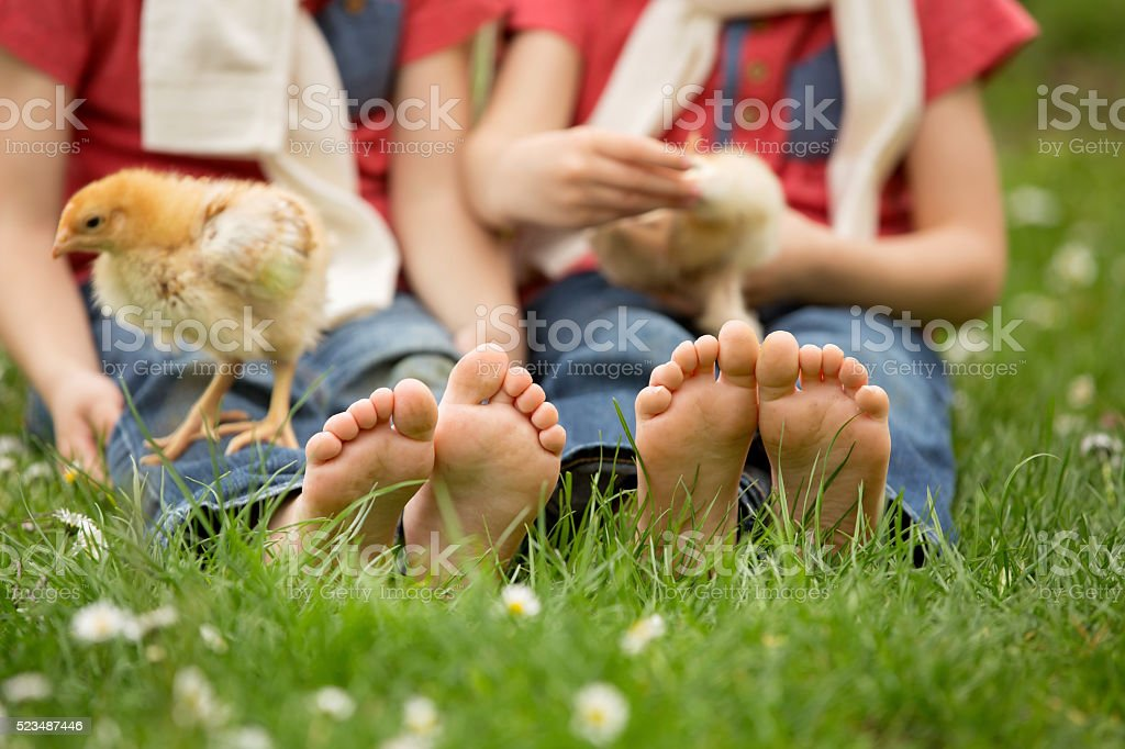 Cute little feet of small children, playing with baby chicks, stock photo