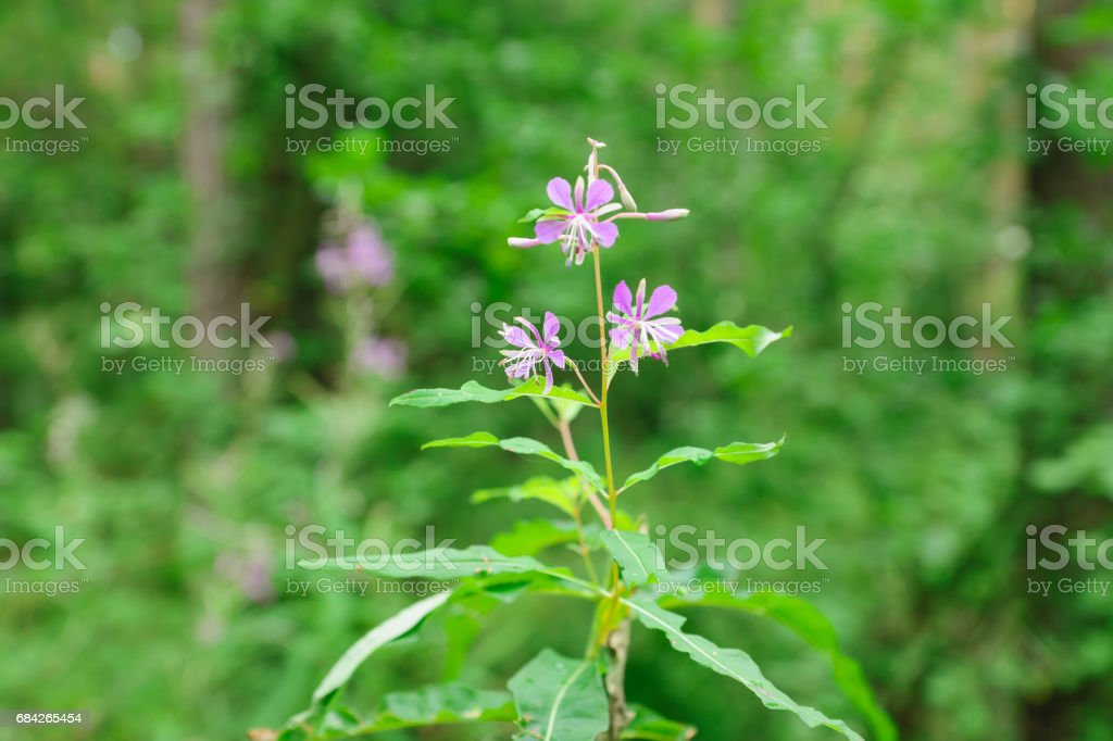 cute little flowers stock photo