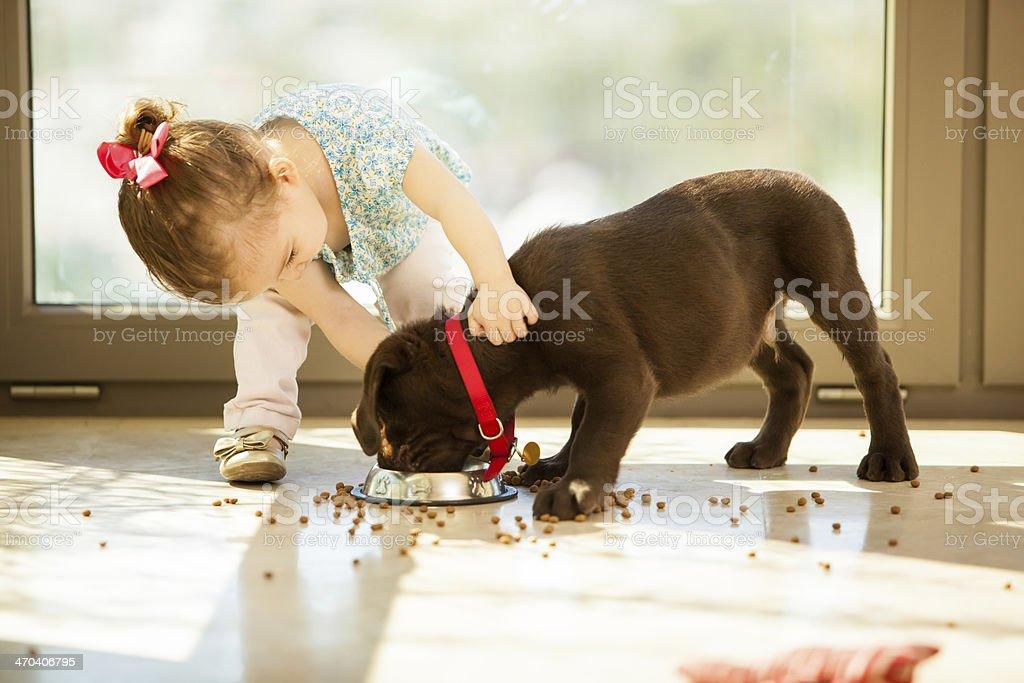 Cute little girl feeding her puppy stock photo