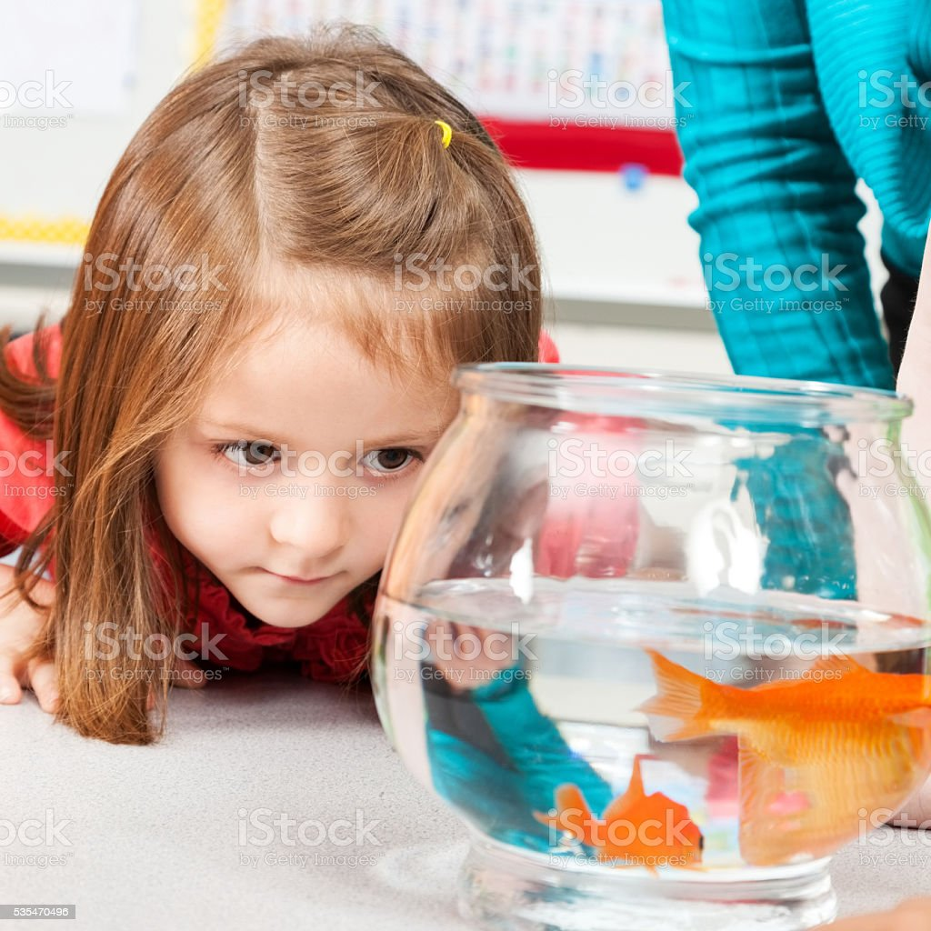 Cute little girl looks at goldfish swimming in bowl stock photo
