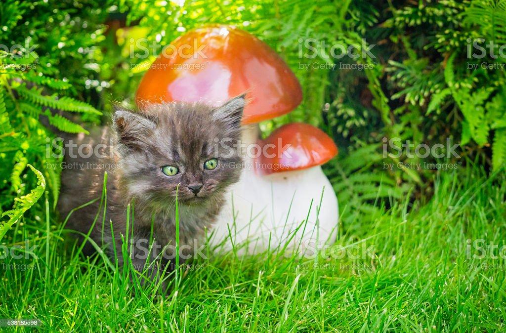 Cute little kitten in green summer garden stock photo
