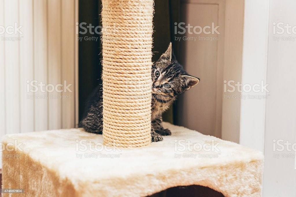 Cute little kitten peering at the camera stock photo