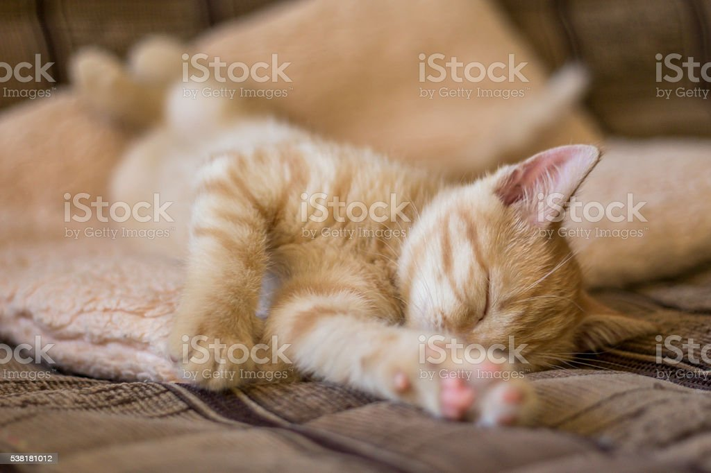 Cute little kitten sleeps in the couch stock photo
