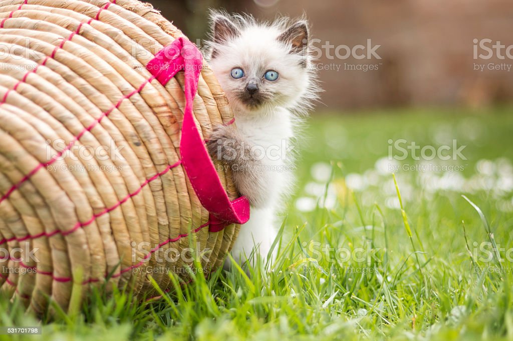 Cute little kitten with a basket stock photo