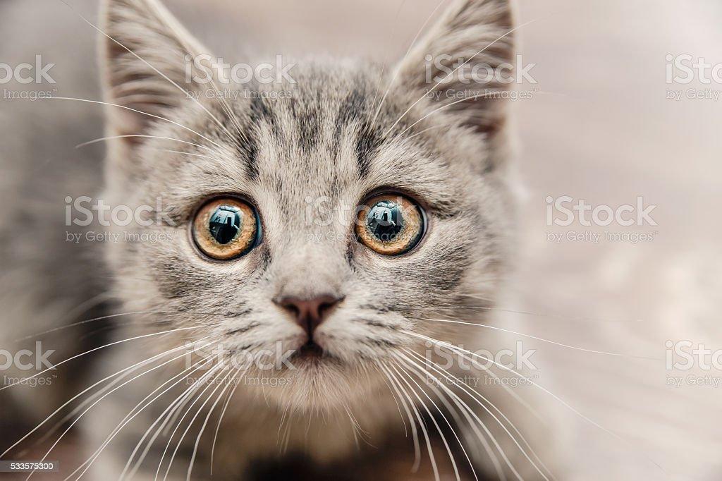 Cute Little Kitten,Touching Look,Toned stock photo
