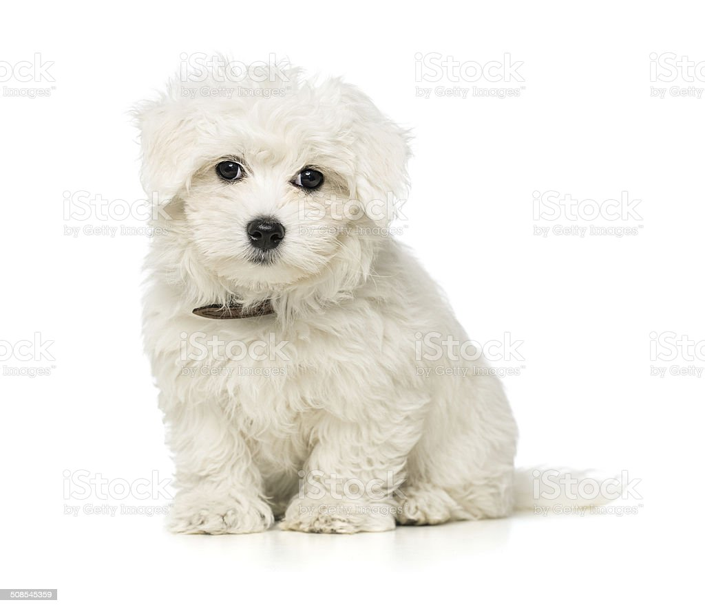 Cute little puppy stock photo