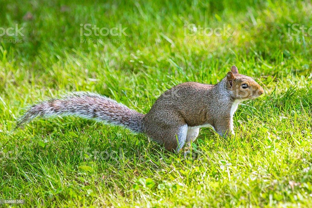 Cute Little Squirrel stock photo