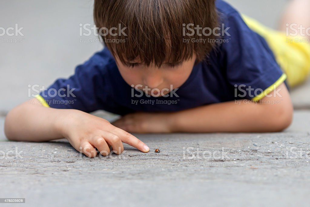 Cute little toddler boy, playing with ladybird stock photo