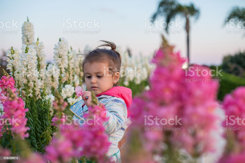 Cute little toddler discovering nature in springtime stock photo