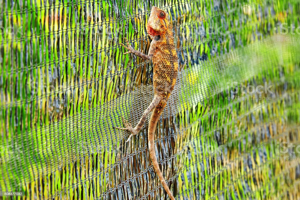 Cute lizard in the bushes of a tropical island stock photo