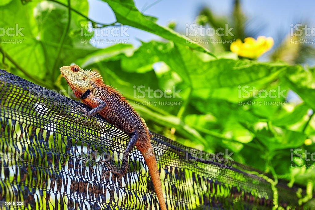 Cute lizard in the bushes of a tropical island. stock photo