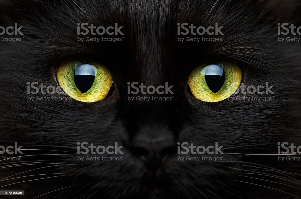 Cute muzzle of a black cat closeup stock photo