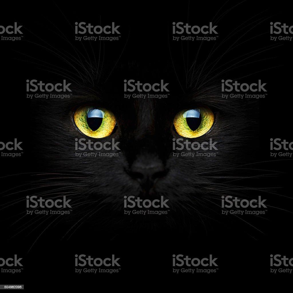 Cute muzzle of a black cat stock photo